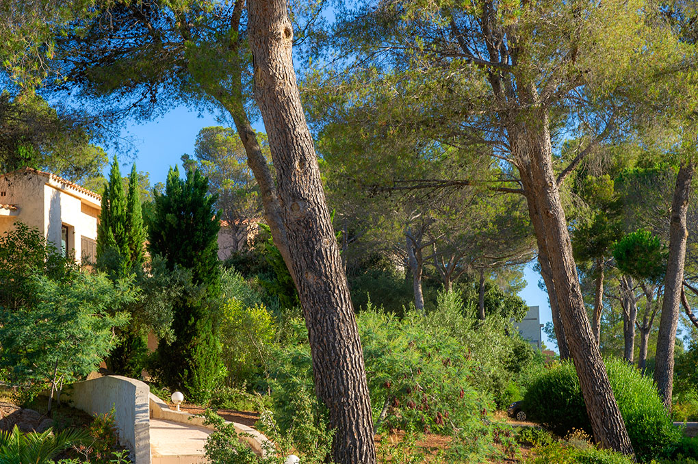 Vegetation of the residence Les Jardins d'Azur in Saint Raphaël
